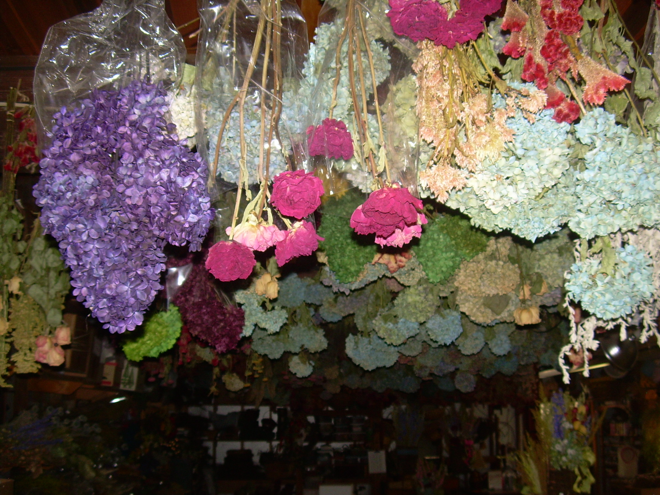 Dried flowers lining ceiling of workroom 003