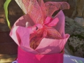 Gift bag with tuberose bulbs, potting soil, pot and instructions!