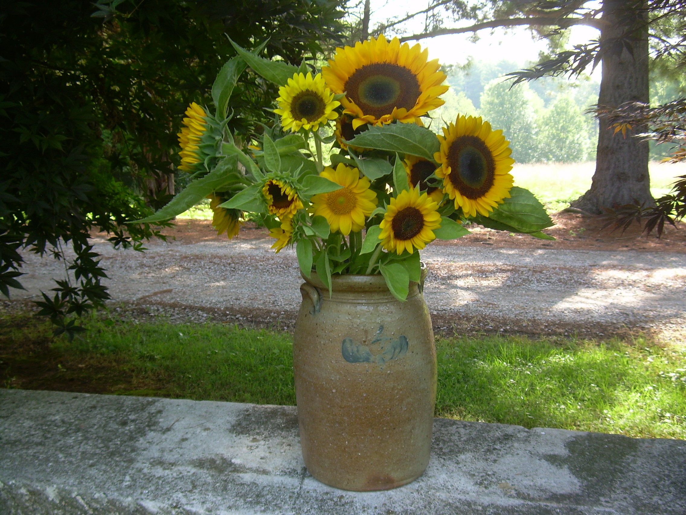 Large crock with sunflowers